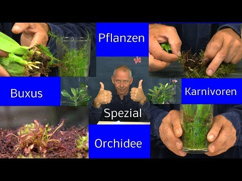 Die Sämlinge und wie geht es weiter mit den Exoten und anderen Pflanzen Teil 320