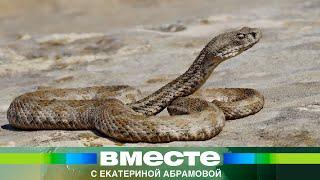 (8.51 MB) Нашествие змей в Армении. Эфир 3.06.2012 Mp3