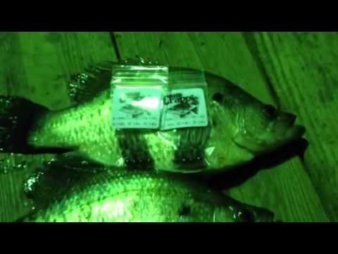 Night Time Crappie Fishing  Uncle Rick's Duck Cove Marina