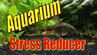 Aquariums Reduce Stress - ASMR