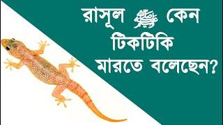 রাসূল ﷺ কেন টিকটিকি মারতে বলেছেন? শাইখ সাইফুদ্দীন বিলাল মাদানী | Stranger Media |