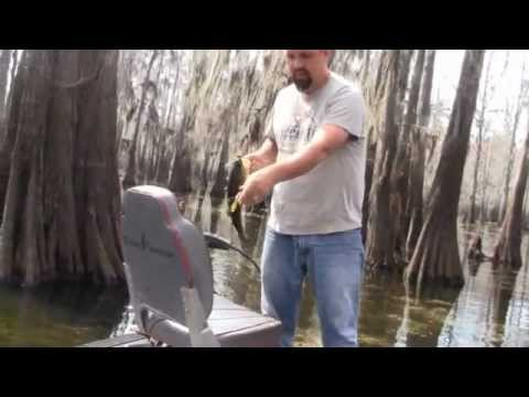 Bass Fishing Louisiana