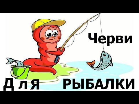 черви для рыбалки элитные бесстрашные