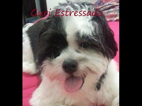 at-cachorro-precisa-estravasar-o-estresse.html