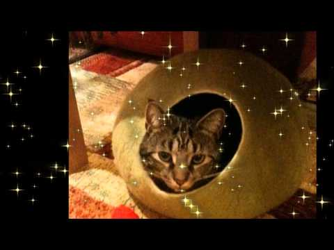 Dedicated Tribute to Pippin a Beloved cat ☾ °☆ ● ¸❤ ★ * ● ¸☆❤ ❤ ☾ °☆