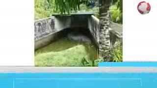 VIRAL... Evakuasi jenazah wanita minahasa di makan buaya