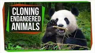 Why Can't We Clone Endangered Species to Save Them?