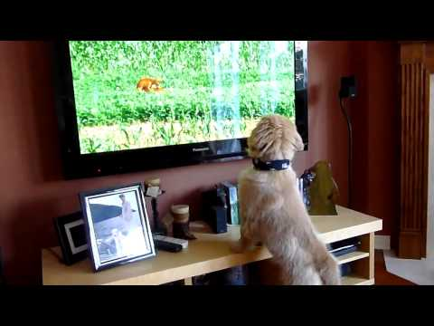 Puppy Watching A Xxx Animal Scene video
