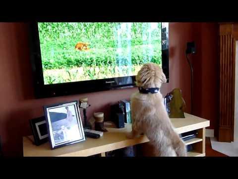 Puppy Watching A Xxx Animal Scene video