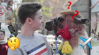 I Answered Your Travel Questions And Met A Llama | Noah Schnapp
