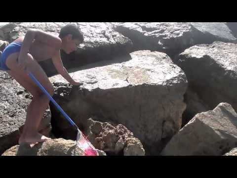2012: La Pesca Dello Stronzolo – Bambini al mare BAMBINI DIVERTENTI VLOG – Vlog Giornalieri