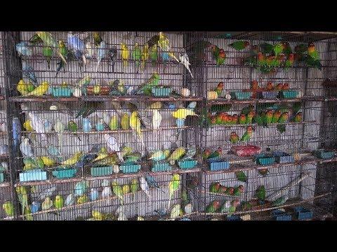 Saddar Birds Market in Karachi [Sep-16-2018]
