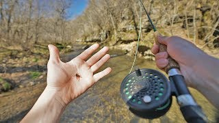 Fly Fishing Trout in Tiny Creek (Catch, Cook, Camping)