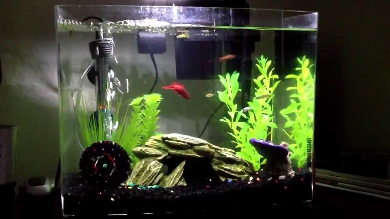 Betta fish community tank 5 5 gallons youtube for Betta fish tank heater