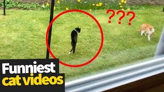 Hilarious Cat Viral Videos  Ultimate Cat Compilation 2019
