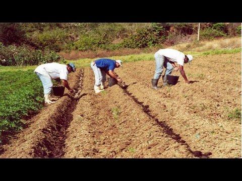 Curso Cultivo Orgânico de Gengibre, Taro - Preparo do Solo