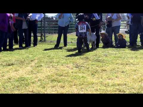 Livemore Jr. Rodeo Jb Goat Undressing video