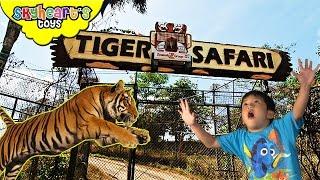 Toddler's Adventure in Tiger Safari - Animals in the zoo lion, zebra, pig, camel, monkey