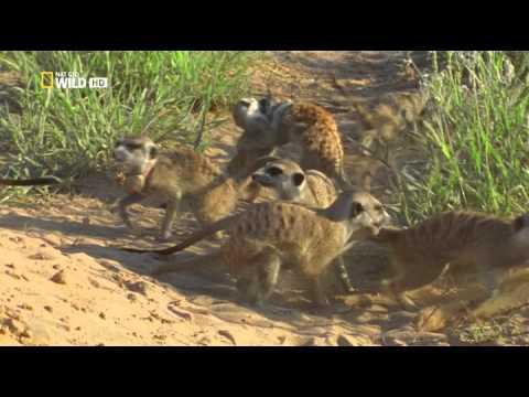 G 4 Life Doku TV 19 - Die Gefährlichsten Tiere Der Welt - Machtkämpfe NEU