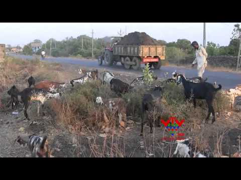 VTV - WATER PROBLEM IN ANIMALS, JUNAGADH