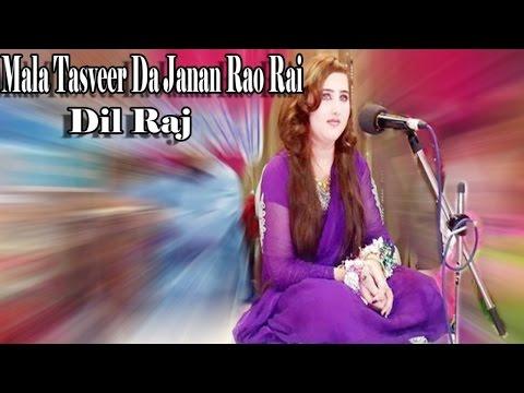 media dil raj pashto songs