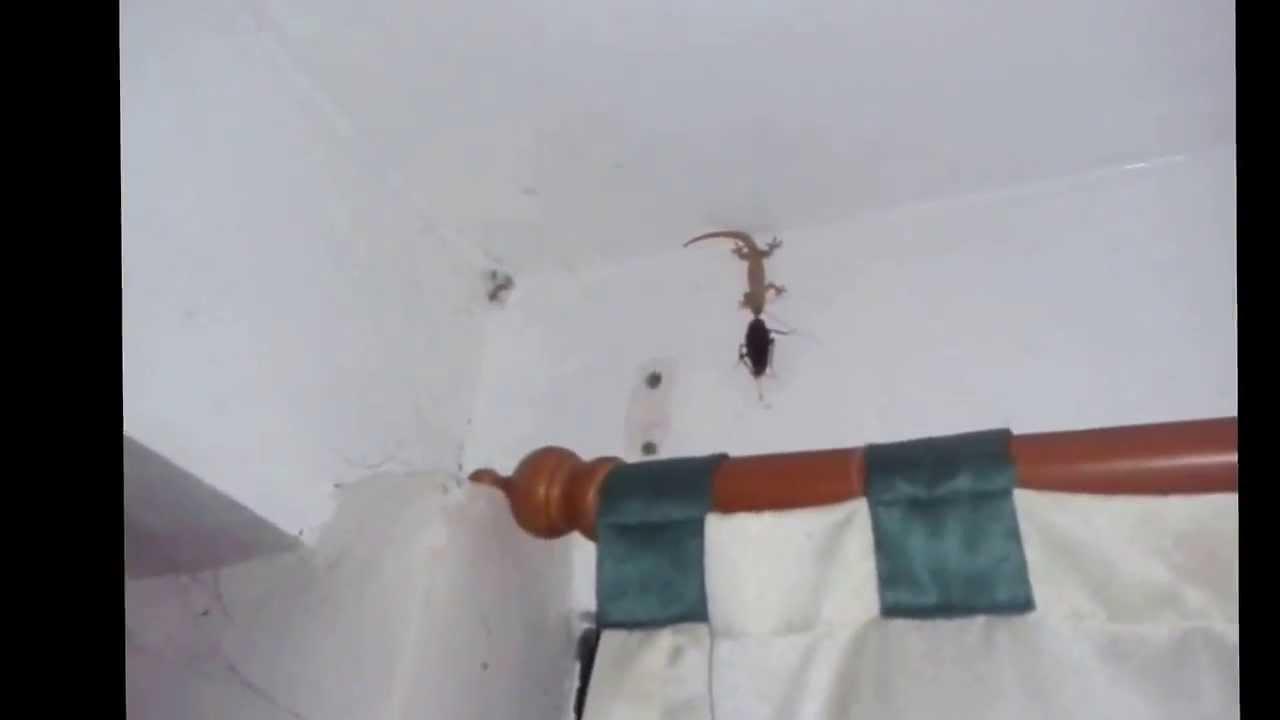Bites Off Cockroach Head