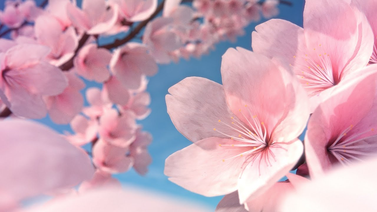 How to Make Cherry Blossoms in Blender - YouTube