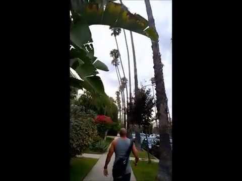 Juaquin Fabela - Santa Monica