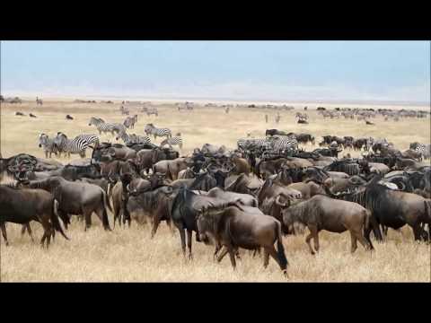 Safari Tanzania Manyara, Serengeti, Ngorongoro, Agosto 2014