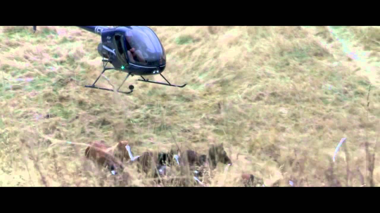 Helicopter Horse Herding Heliops Herding Wild Horses