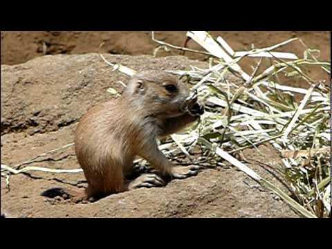プレーリードッグの赤ちゃん。Baby Prairie Dog.Edogawa Zoo.#03