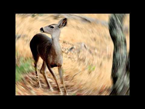 Musk Deer Musk Gland Musk Deer Scary Plz Watch