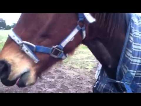 Wood Sucking - Horses video