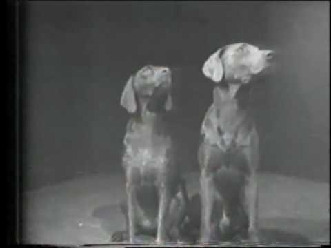 William Wegman: 'Two Dogs & Ball'