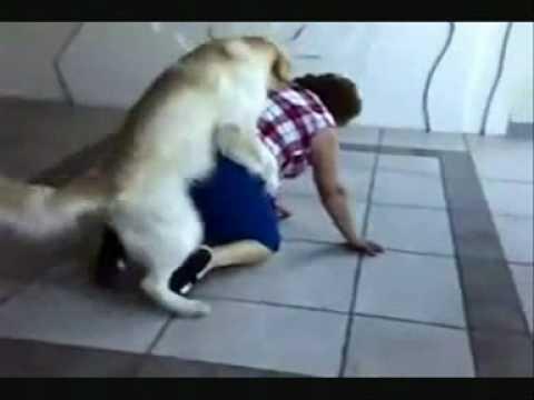 cachorro comedor (dublado)