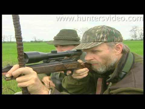 abnormal-roebucks-hunters-video.html