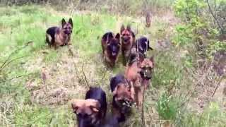download lagu The Ultimate German Shepherd Pack gratis