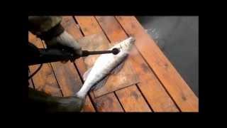 Самарские подвохи чистят рыбу