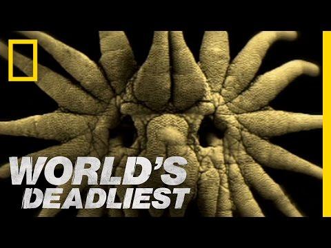 World's Deadliest - Is This the World's Weirdest-Looking Killer?