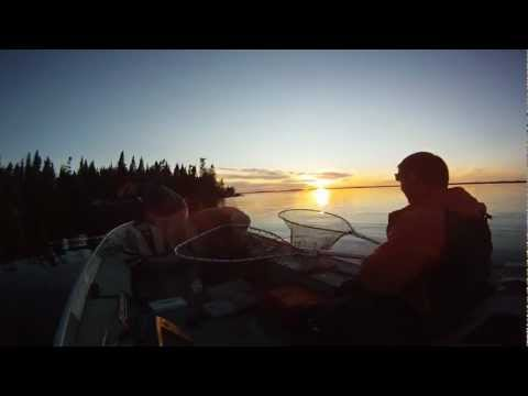 Monster Walleye Fishing 33 Inches - Guidecam 3.10