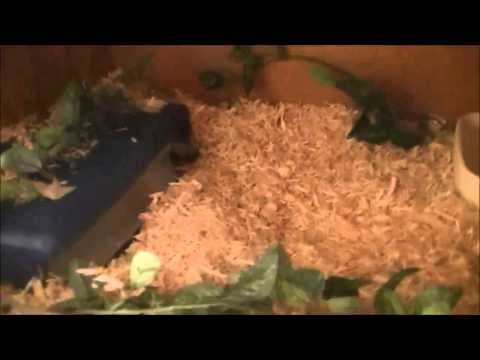 May 2013 Reptile Room Update