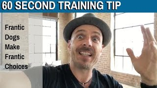 60 Second Training Tip: Frantic Dogs Make Frantic Choices