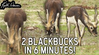 Husband & Wife Blackbuck Hunt