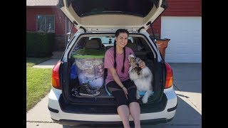 HOW I LIVE OUT OF MY CAR (WITH MY DOG)   Bed Setup, Organization + Survival Gear