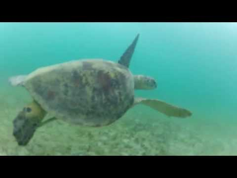 Swimming with turtle in Las Cabanas Palawan Philippines 2013