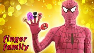 Spiderman & Pink Spidergirl Finger Family ★ Real Life Superhero Daddy Finger Song for Kids & Toddler