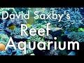 David Saxby's Aquarium 2017