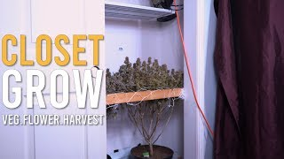 CLOSET HARVEST: START TO FINISH (FULL GROW CYCLE)