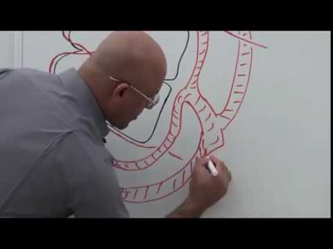 Trochlear Nerve and its Clinical Correlates - Neuroanatomy Part 1/2