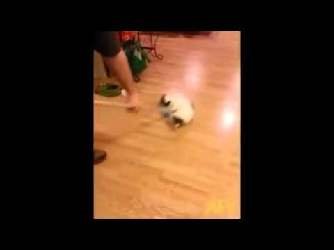 Is Cat Hurling a New Olympic Sport